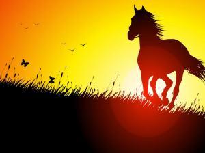 horse-running-at-sunset